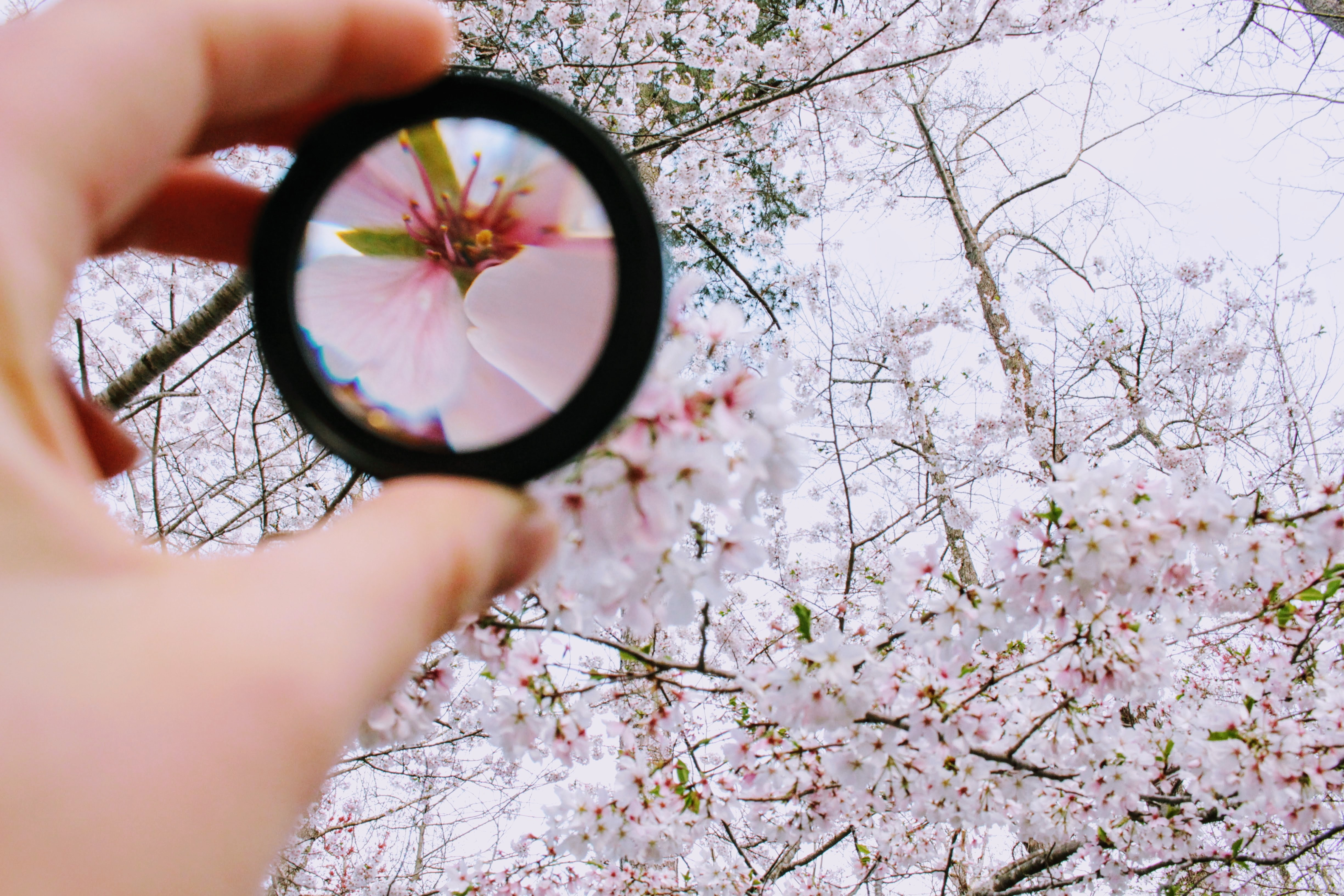 Want to re-focus your life