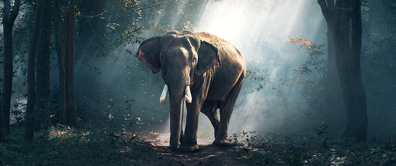 Be smarter than the elephant and make your life more meaningful and free